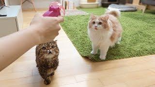 고양이들이 제일 좋아하는 장난감을 찾았어요