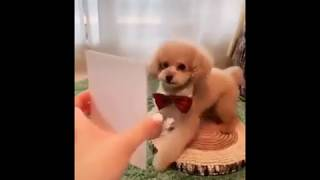 Funny Dog copying what in the photos