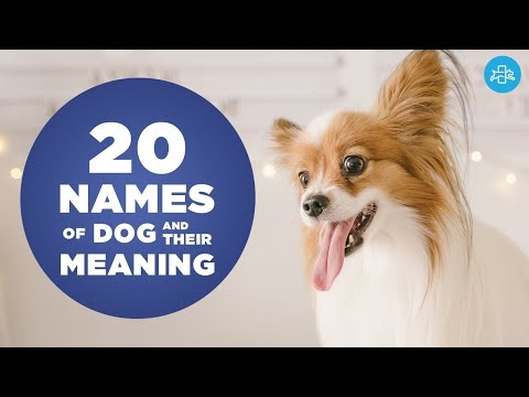 UNIQUE NAMES For SMALL Male DOGS And Their Meaning