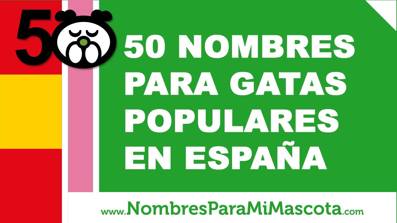 50 nombres para gatas populares en espa a www