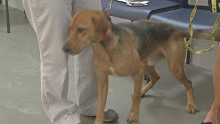 Free adoptions at Erie County SPCA Saturday make way for hurricane rescues