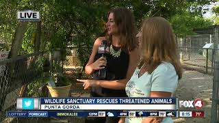 Octagon Wildlife Sanctuary rescues threatened, abused animals -- 8am live report