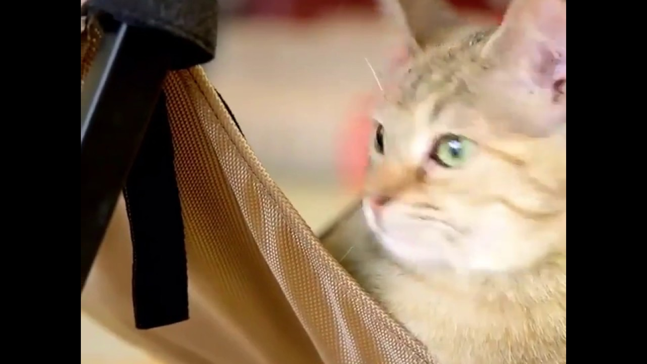 Cat Hammock Under Chair Kmart Beach Chairs With Canopy Youtube