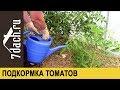 Подкормка томатов: ЗОЛА и ЙОД - 7 дач