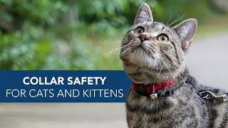 Cat and Kitten Collar Safety with Coastal Pet