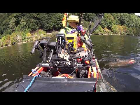 Siuslaw Kayak Salmon Fishing: 9/19/2019 King