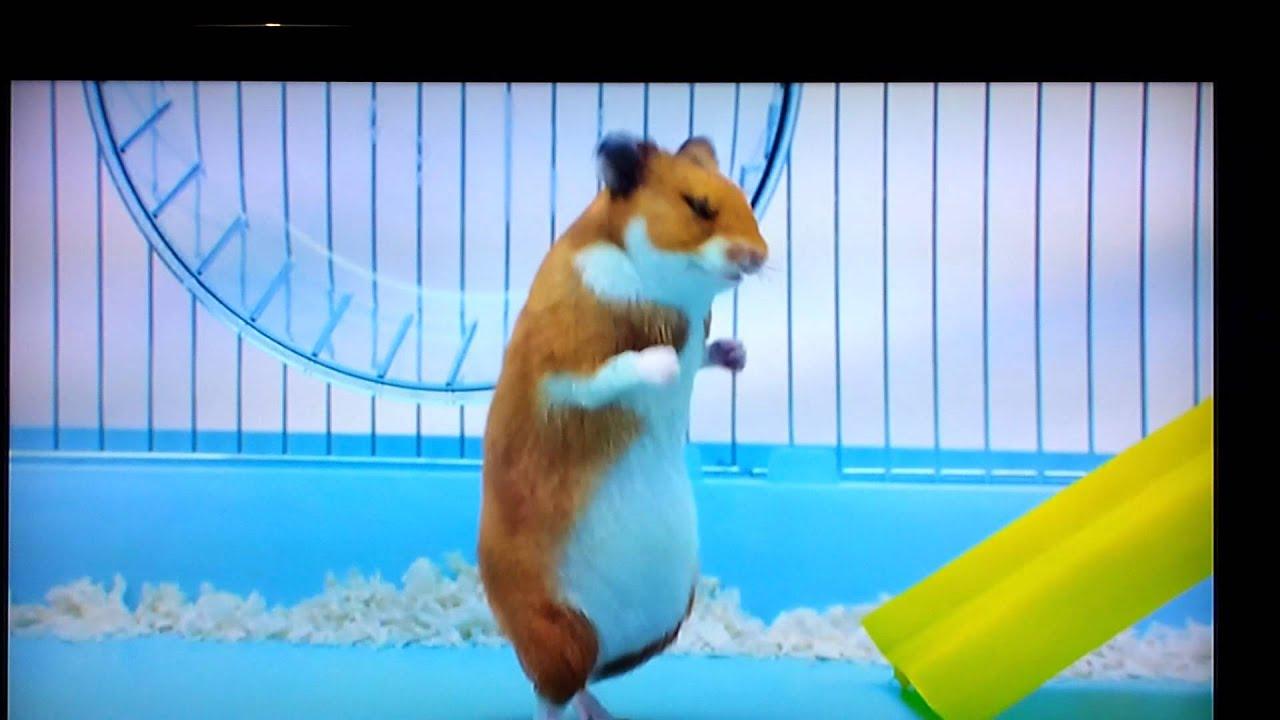 X hamster free