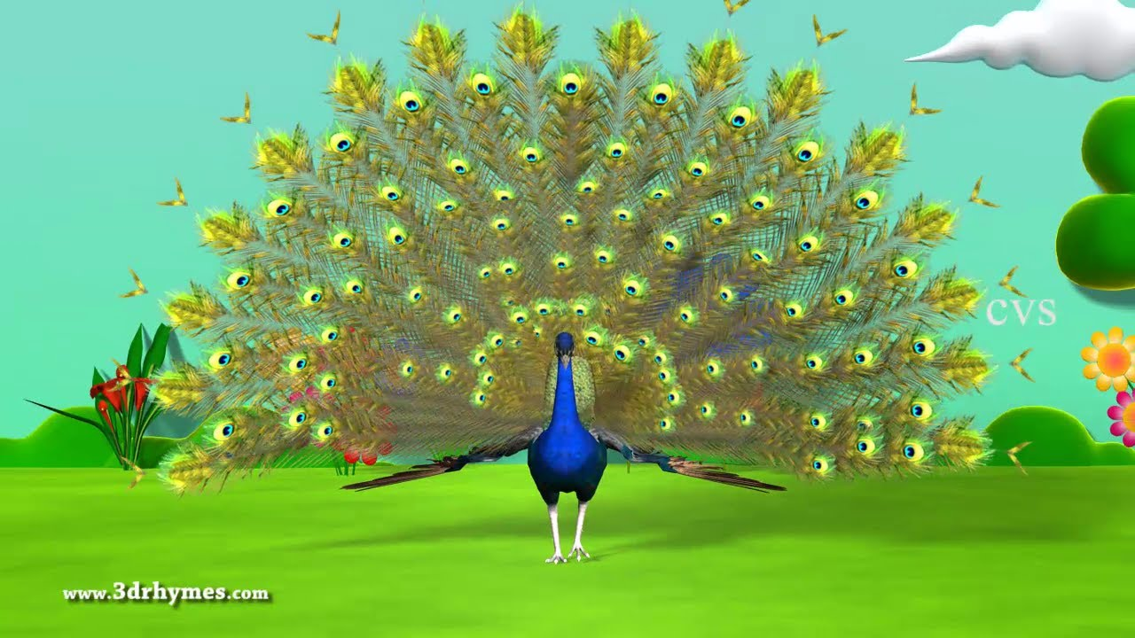 Learn English Birds Names - 3D Animation Preschool Nursery rhymes ...