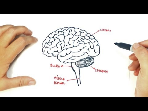 How to draw a The human Brain | The human Brain Easy Draw