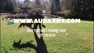 Board and Train At Audax K9 Academy