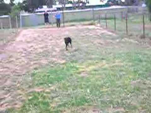 SuperPUP in action