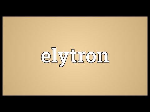 Header of elytron