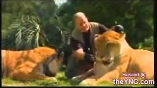 حيوان  ناتج عن تزاوج نمرة مع أسد