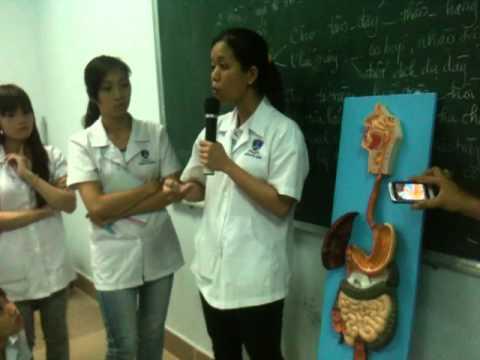 Bài giảng Y học cơ sở 2 - Hệ tiêu hóa