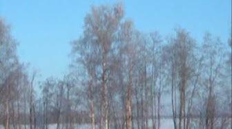 Antti Huovila - Muuttolinnut