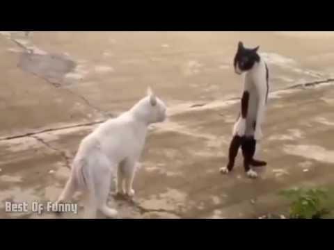 Video Lucu Banget Bikin Ngakak Abis 2 I Best Of Funny