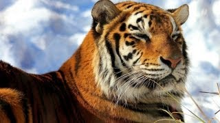 Save The Tiger - Relax Music - Musica Indiana Rilassante - Relaxation Music - Music Indian Song