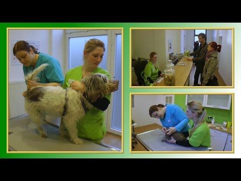 Tierarzthelferin Ausbildung Was Du Wissen Solltest