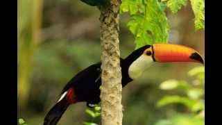Sounds of Nature: Amazon Rainforest