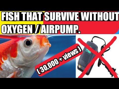 Fishes That Survive Without Oxygen(extra) | Fishes That Survive Without Air Pump.