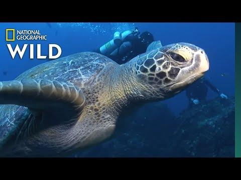Sea Turtles 101 | Nat Geo Wild