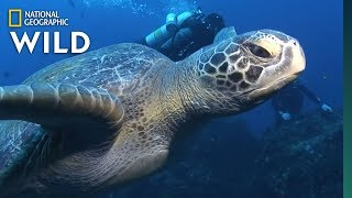 sea-turtles-101-nat-geo-wild