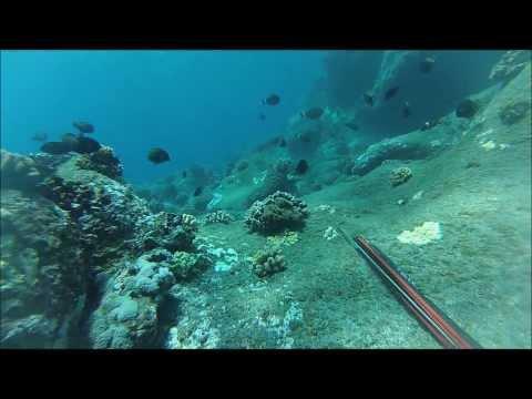 Spearfishing Hawaii big island puna