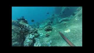 Spearfishing Hawaii big island puna