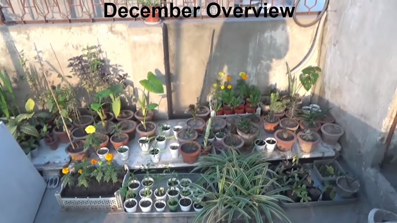 Kitchen Gardening Kitchen Gardening Overview With Winter Tips December 2016