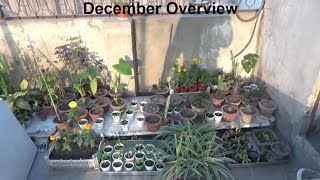 Kitchen Gardening Overview | With Winter Tips | December-2016 (Urdu/hindi)