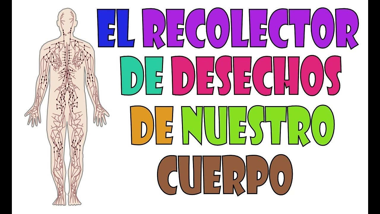 El Sistema Linfático: El recolector de basura de nuestro cuerpo ...