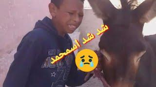 شوفو اشواقع مع يونس  بيكالتي أو حمارة مطورة شد شد اسمحمد