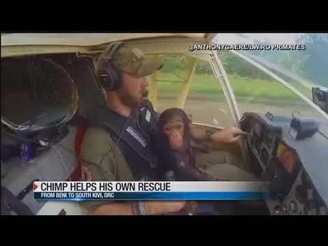 Chimp becomes co-pilot on flight to sanctuary