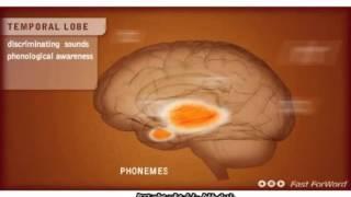 台灣大腦地圖BrainMaps - 大腦重塑與學習