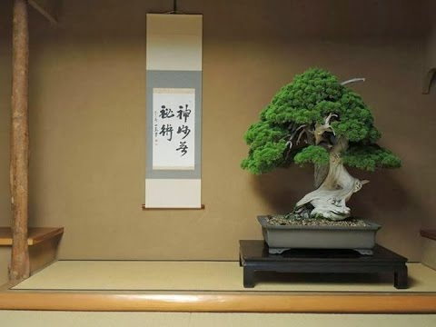 There are many Famous Bonsai Tree