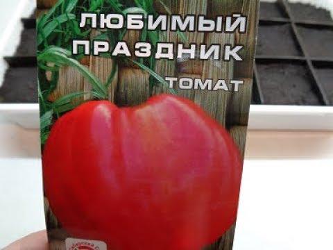 САМЫЕ КРУПНЫЕ СИБИРСКИЕ ТОМАТЫ! СОРТ ЛЮБИМЫЙ ПРАЗДНИК. Обзор Ольги Черновой. | крупные | томаты | огород | самые | сад