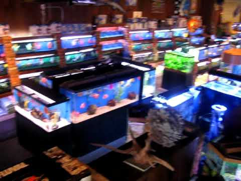 Nyc 39 s largest aquarium fish store fishtown usa nyc for Fish aquarium stores