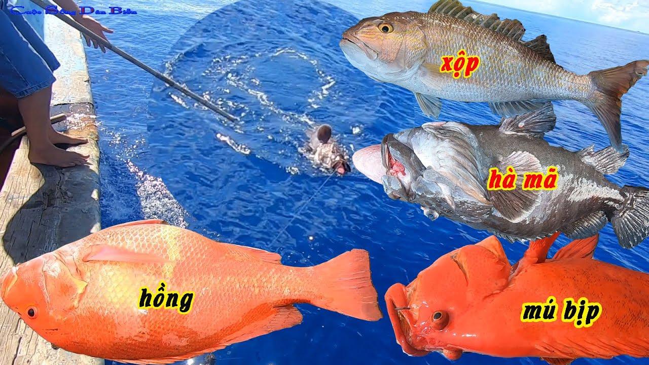 Những Cú Giật Câu Cá Bự Trong Chuyến Câu Cá Biển Dài Ngày.go fishing.