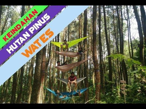 menikmati-keindahan-wisata-hutan-pinus-wates-di-lebak