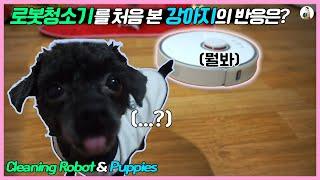 로봇청소기를 처음 본 강아지의 반응은!!^^적응할 수 …