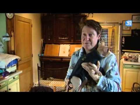 Elevage De Chats Sphynx En Haute-Normandie