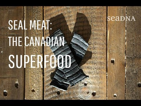 SEAL MEAT : The Canadian Superfood