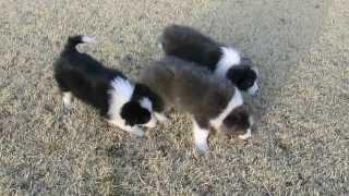 撮影日2013年3月9日 アライ畜犬牧場 www.araichikuken.com.