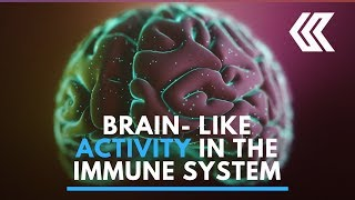 Brain-like activity observed in the immune system for the first time