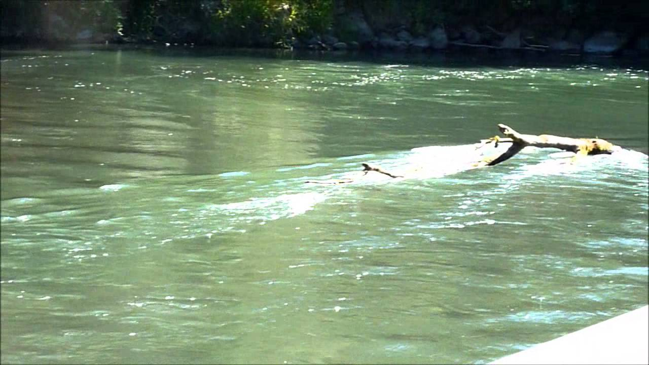 Nisqually river handicap hole youtube for Nisqually river fishing report