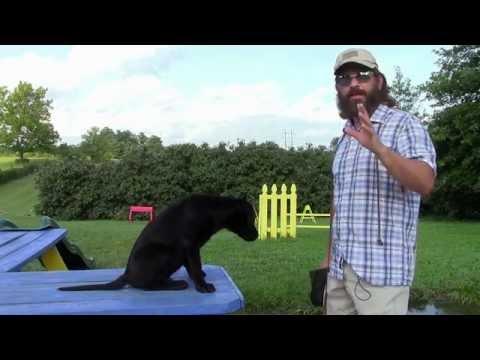 Training Your Labrador Retriever Puppy Part One