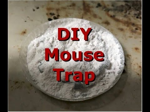 How To Get Rid Of Rats And Mice In Home For Less Than $1.00