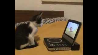 Кот смотрит мультик 'Том и Джерри' Cat watch 'Tom and Jerry'