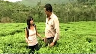 Savour the essence of tea in God's Own Country, Kerala