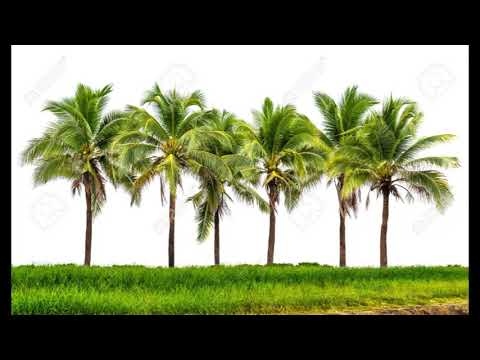 Download Trees Names In Telugu MP3, MKV, MP4 - Youtube to MP3